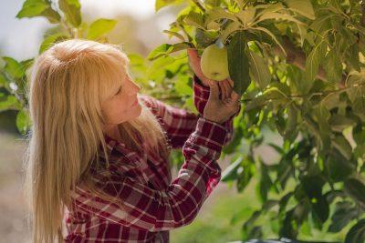 Frau pflückt einen Apfel