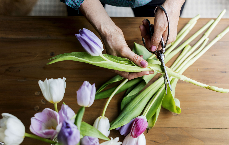 Tulpenstrauß für den Frühling