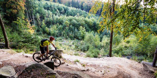 Mountainbike Fahrer im Herbst im Wald mit Helm und Fahrrad