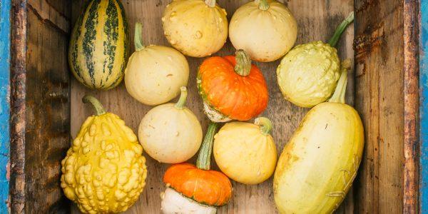 Verschiedene Gemüse Sorten im Herbst. Kürbisse